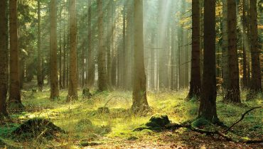 Forest Management: Creating a habitat wildlife will want to call home.
