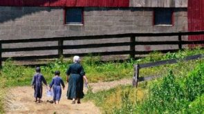 How are Amish communities organized?