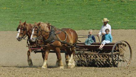 Amish-Ordnung