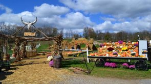 Fall Festival at The Farm at Walnut Creek