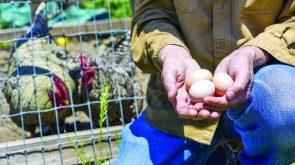 Raising Chickens Workshop